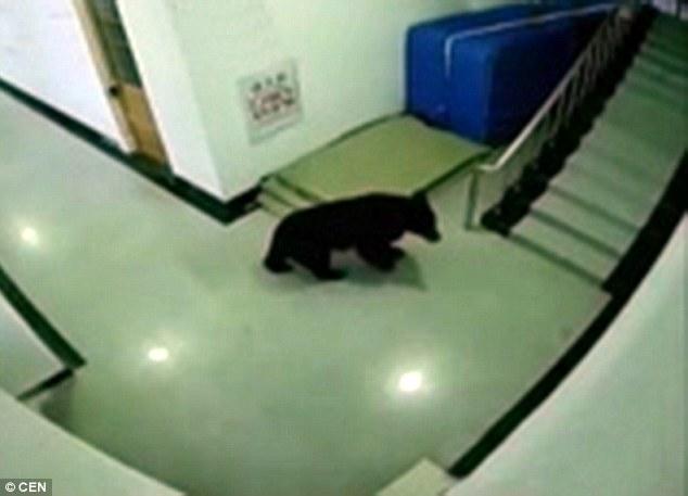 فيديو | الشرطة الصينية تقتل دب صغير كان يتجول في ساحة مدرسة