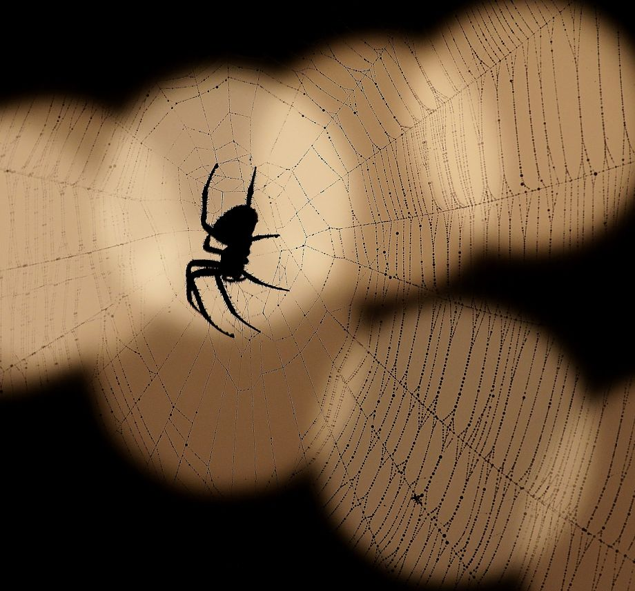 فيديو | ملايين العناكب تغزوا بلدة أمريكية وتثير الرعب بين سكانها