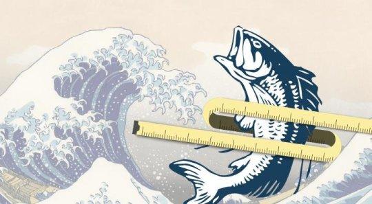 فائدة جديدة لم تسمعوا فيها من قبل في زيت السمك