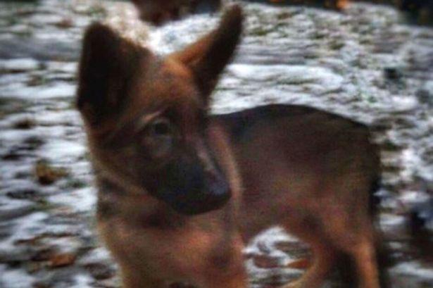 روسيا ترسل لفرنسا كلب بوليسي كعمل تضامني بعد وفاة كلب الشرطة أثناء مكافحة الإرهاب