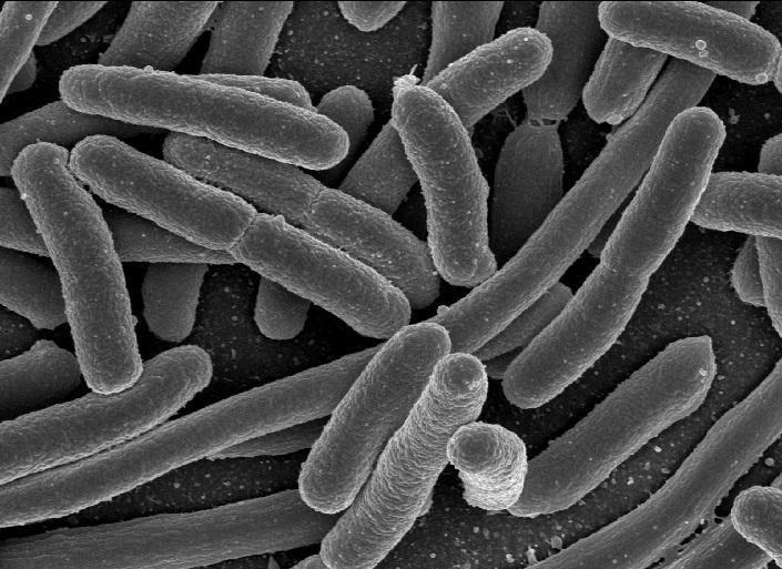 الجراثيم تزيد من القدرة على توزيع وتخزين الحديد